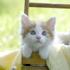 癒し系CAT